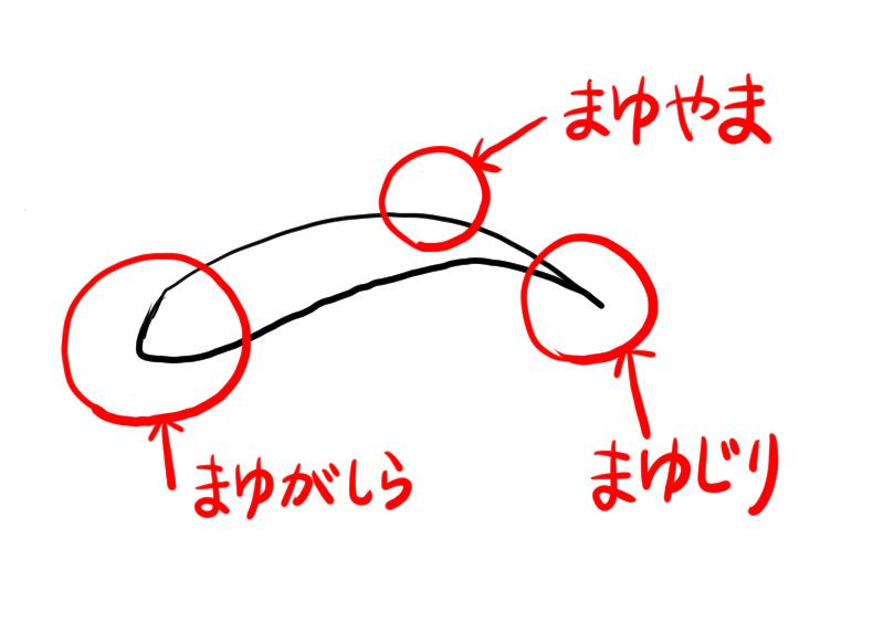似顔絵のコツ・眉毛の観察02