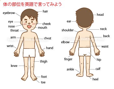 小学校英語の教材教科書イラスト