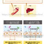 医療系のイラスト制作★人体・内蔵・細胞・肌断面図