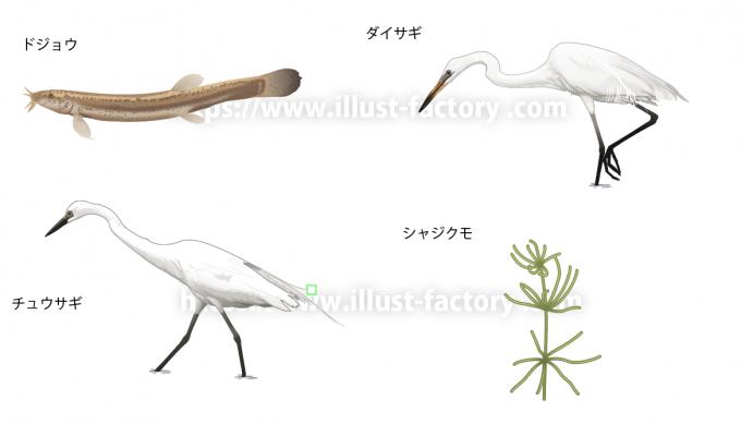 リアルで写実的な動物や昆虫などの生き物のイラスト制作