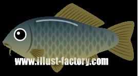A136-03 魚イラスト コイ・鯉