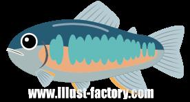 A136-05 魚イラスト オイカワ