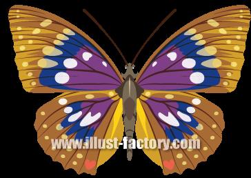G184-05 リアル 蝶のイラスト