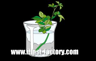 G223-03 植物のイラスト