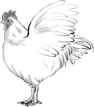 G313-1 水墨画 鶏のイラスト