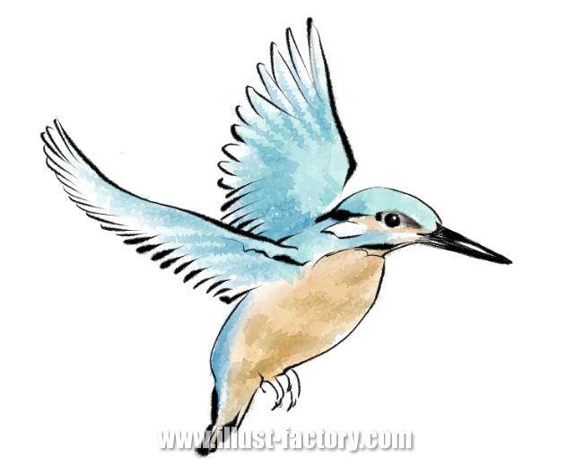 G368-3 鳥(カワセミ)イラスト制作