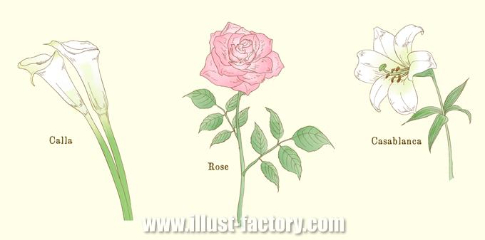 G371 花・植物の手描き風イラスト制作