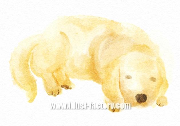 G401-03 手描き水彩イラスト 犬