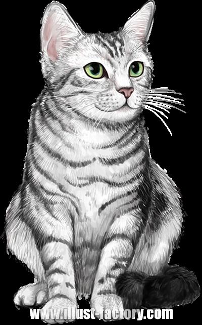 G402-01 リアルタッチ動物イラスト制作 猫