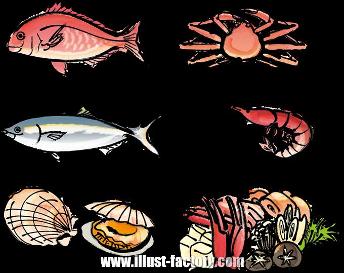 G407 【海鮮・魚】手書き風、筆タッチイラスト制作