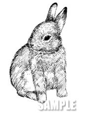 G49-05 手描き ウサギのイラスト