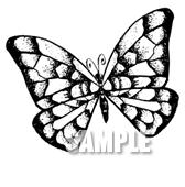 G49-08 手描き チョウのイラスト