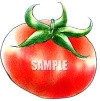 H07-21 トマトのイラスト制作例(色鉛筆風)