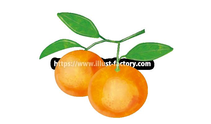 H104-04 水彩風オレンジのイラスト制作