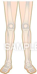 H14-11 骨の図解・イラスト 足