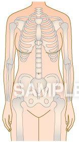 H14-08 骨の図解・イラスト 体