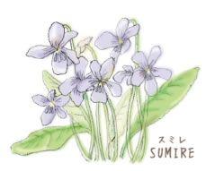 H23-01 菫・スミレ