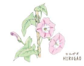 H23-02 ヒルガオ