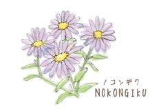 H23-04 ノコンギク