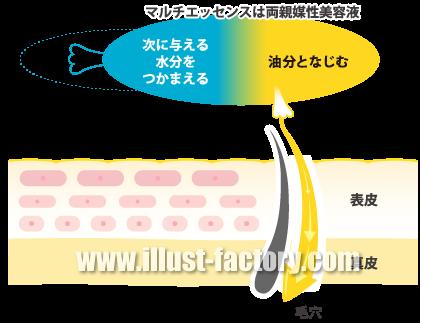 H48-02 皮膚断面図