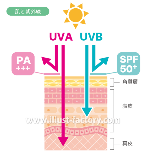 H87-02 肌と紫外線