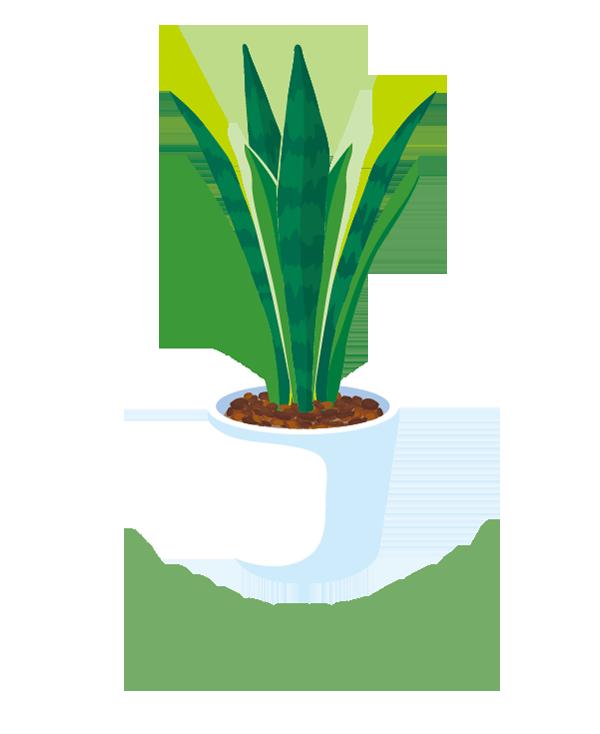 H90-05 サンセベリアのイラスト制作