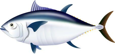 S03-09 魚のイラスト制作例(マグロのイラスト)