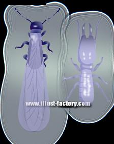 S19-08 害虫イラスト 白アリ