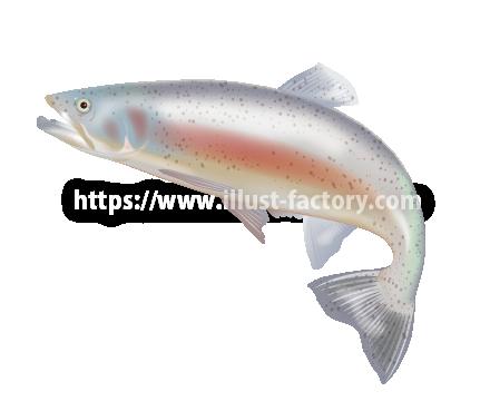 S30-02 リアルタッチ海洋生物イラスト 鮭