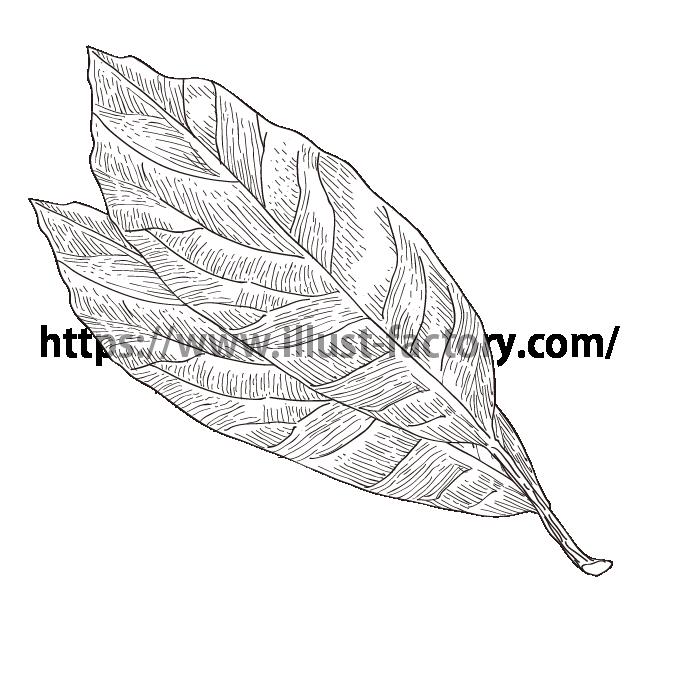 S34-02 ペン画タッチ植物イラスト 月桂樹(ローリエ)