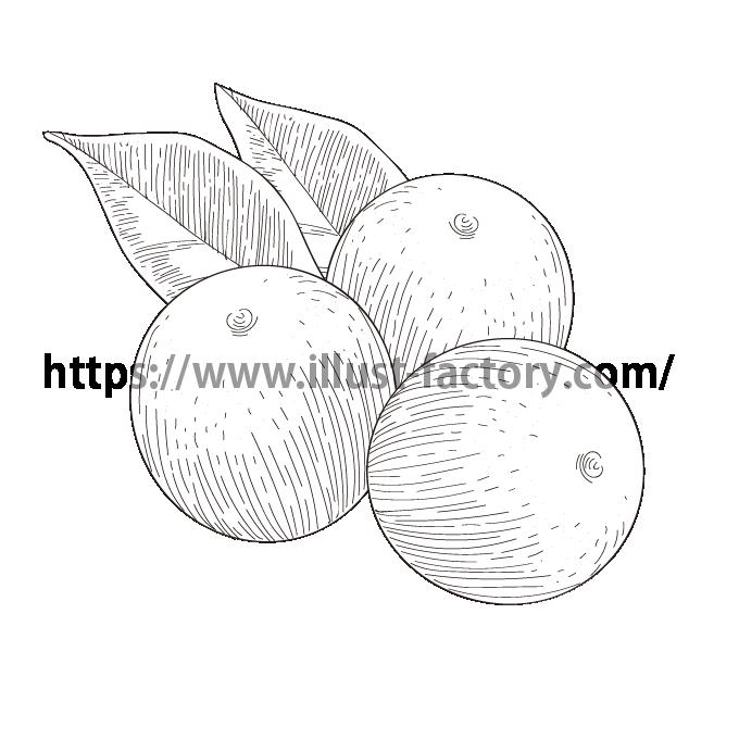 S34-06 ペン画タッチ植物イラスト キンカン