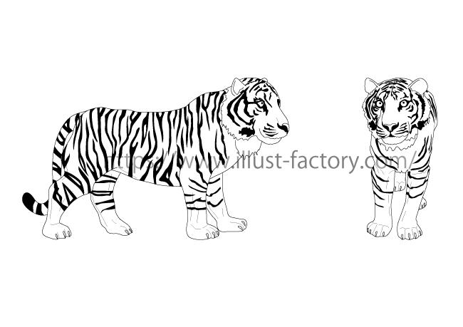 模型用トラのイラスト 写実的な白黒線画タッチ H143