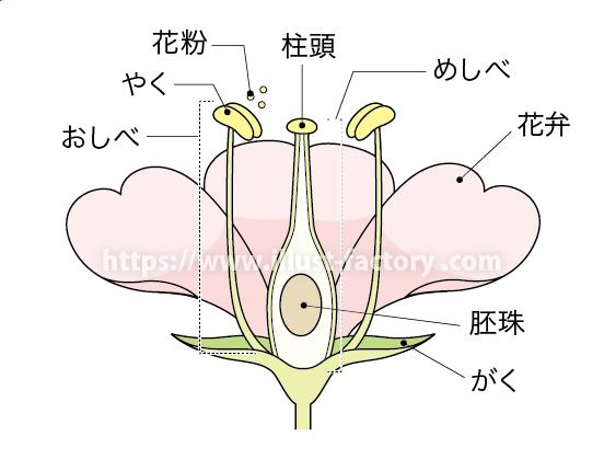 中学校理科教材用のイラスト 教科書向けタッチ H150-2