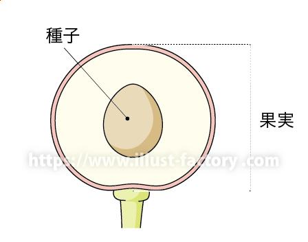 中学校理科教材用のイラスト 教科書向けタッチ H150-3