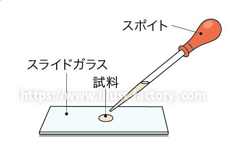 中学校理科教材用のイラスト 教科書向けタッチ H150-4