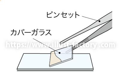 中学校理科教材用のイラスト 教科書向けタッチ H150-5