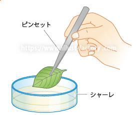 小学校・中学校の理科教科書用実験・実技用イラスト H154-3